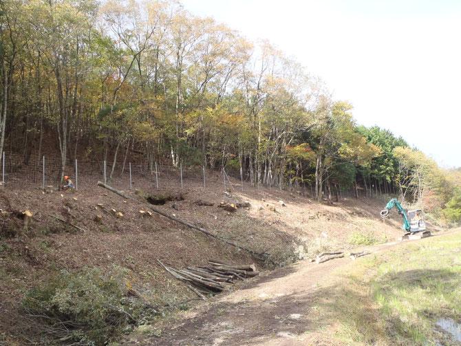 里山整備中(バッファゾーン整備) 伐った木は薪炭として活用します。