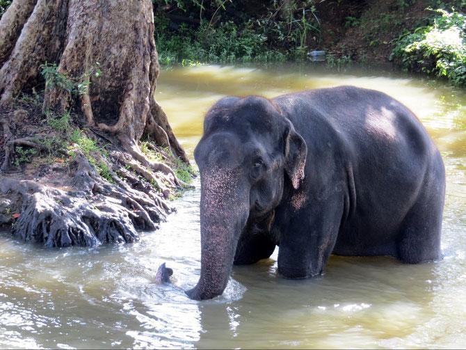 Wir lieben Elefanten