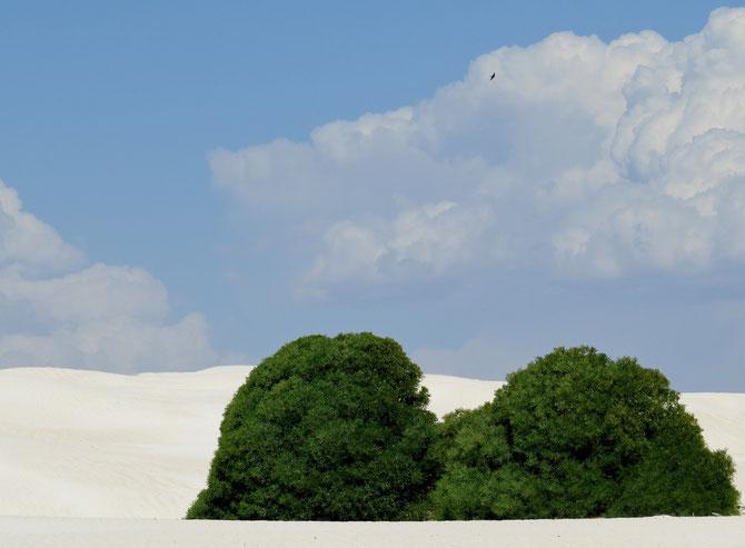 Puderzuckersand mit grünen Hauben