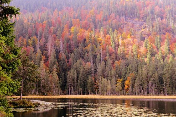 Deutschland Bayrischer Wald