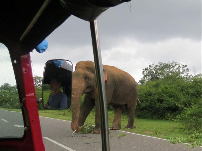3 wilde Elefanten dürfen wir erleben.
