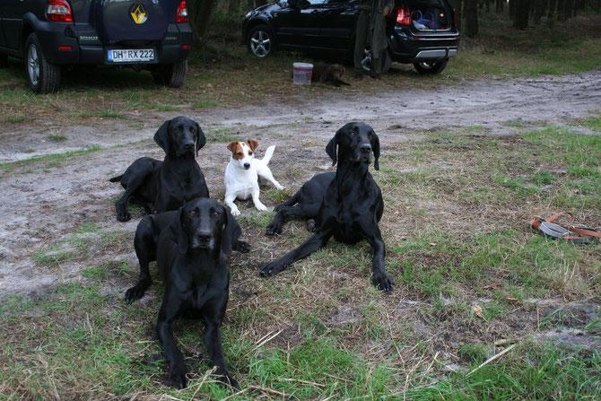 Besuch im Hundekurs bei Heiner Meyer, 27330 Asendorf - v.l. Baffy vom Schlosshof, h.l. Kessy von Königsmarck, Grete und Emir