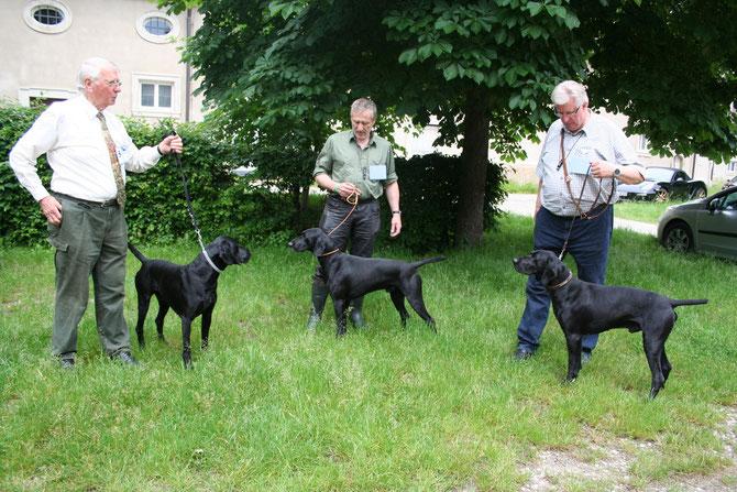 """Die 3 schwarzen """"Hansaburger"""": von links nach rechts: David, Emir, Dingo"""
