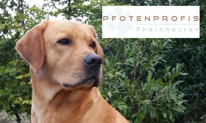 Die Pfotenprofis Rheinhessen sind die zertifizierten Hundeerzieher- und Verhaltensberaterinnen IHK/BVH  Anja Rotenburg und Chris Mann
