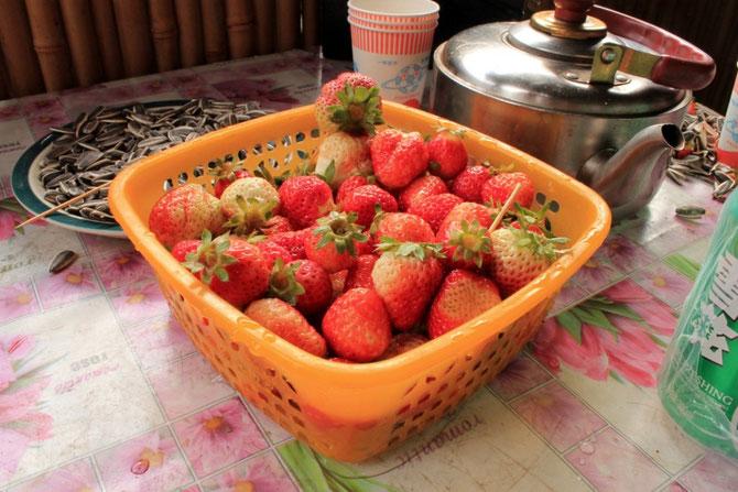 Zu Besuch bei Onkel Erdbeere