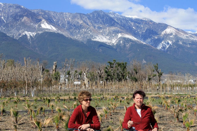 Im Hintergrund die schneebedeckten Cangshan Berge