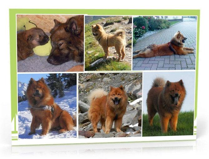 Den 5. Geburtstag feiert heut unser lieber Avito-Bär!!!
