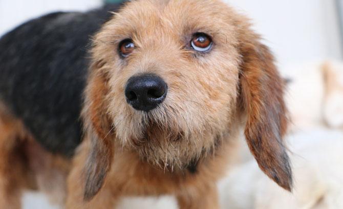 Collarino sardinienhunde e v for Argo fabiola