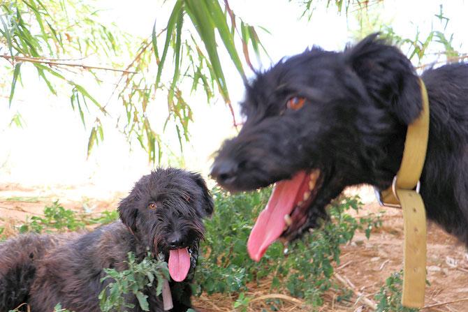 Azz mit seinem Bruder Anto im Vordergrund