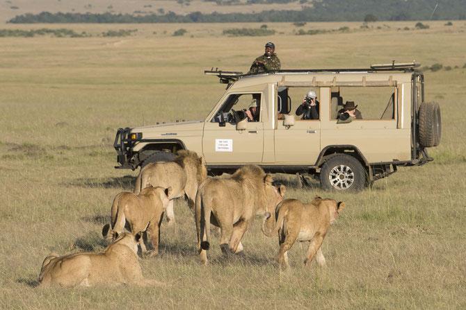 Fotosafari, Kenia, Wildlife Fotografie, Uwe Skrzypczak, DM Tours, Masai Mara