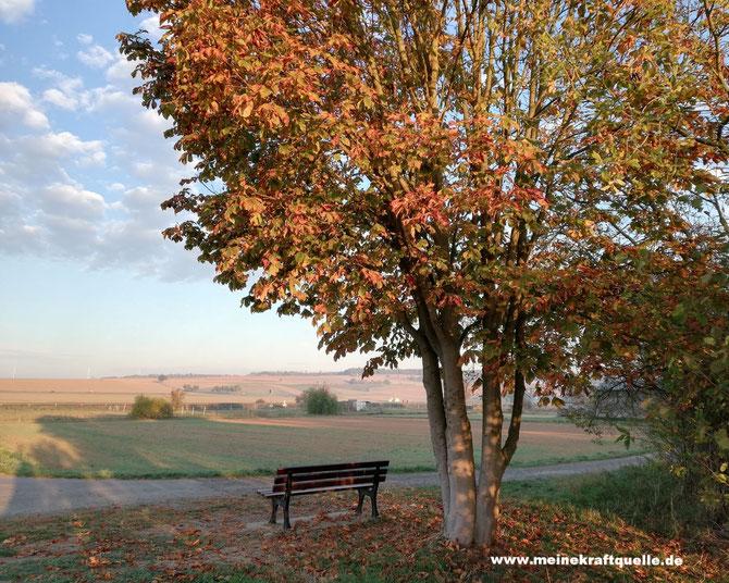 Kraftquelle, Herbstbild, Baum mit Bank, Kraft tanken im Herbst, Freitagslieblinge