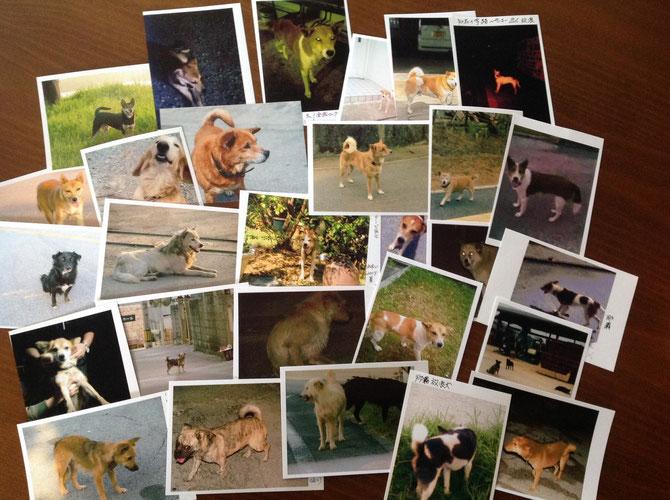 沖縄の犬達(放浪犬が沢山いる)