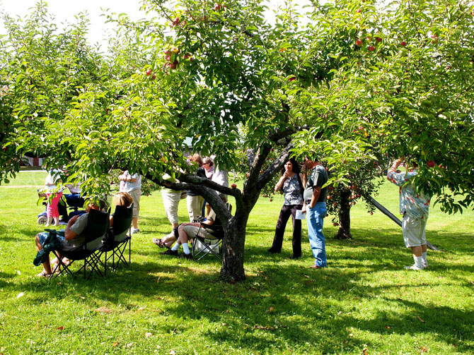 Watching the Fiddle Contest from Under the Apple Trees in the Orchard