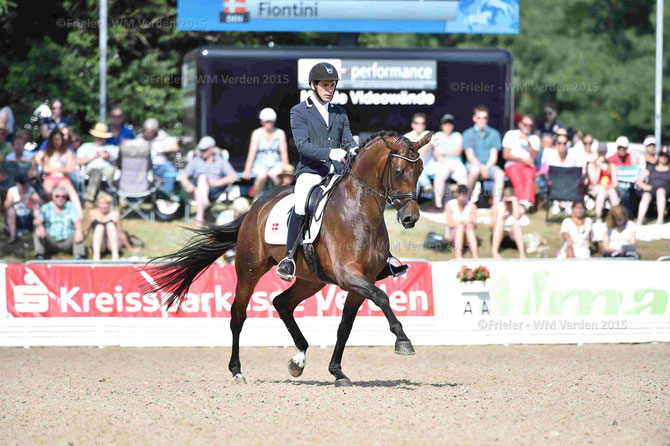 Danish Warmblood Mare Fiontini won the first qualification of five-year-old dressage horses in Verden/ Germany. (Photo: Karl-Heinz Frieler)