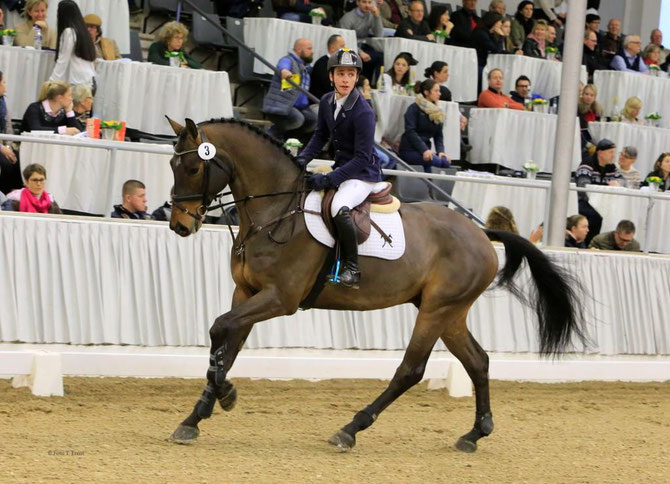 Hanoverian, Showjumping Horses, Dressage Horses, Foal, Mares, Stallions, Breedinghoses, Horse Breeding, Member of GHI