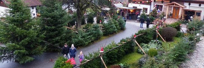 Wann Weihnachtsbaum Kaufen.Weihnachtsbäume Ferienwohnung Bauernhof Bayerischer Wald