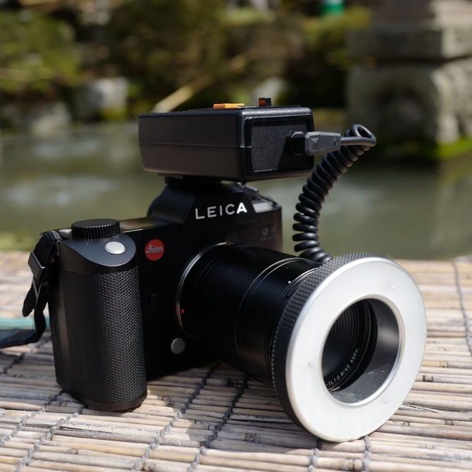 画像: Leica SL+ LeicaTL 60mm macro+ Kaneko Macro Flash