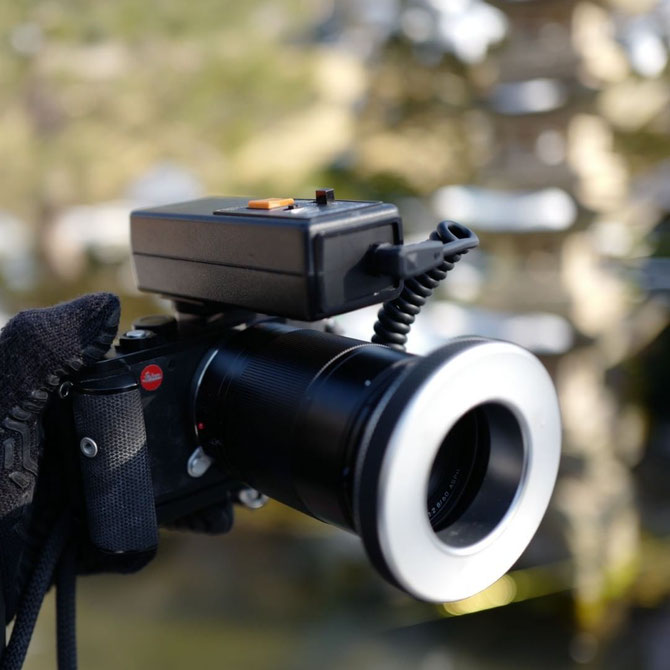 画像: Leica CL+ LeicaTL 60mm macro+ Kaneko Macro Flash