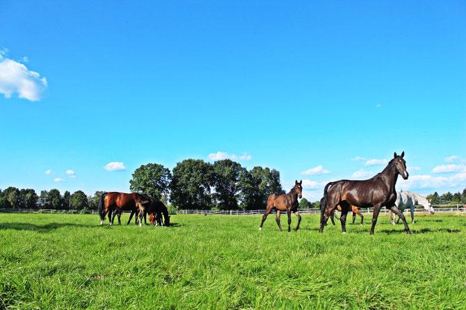 Pferdeklinik Großmoor