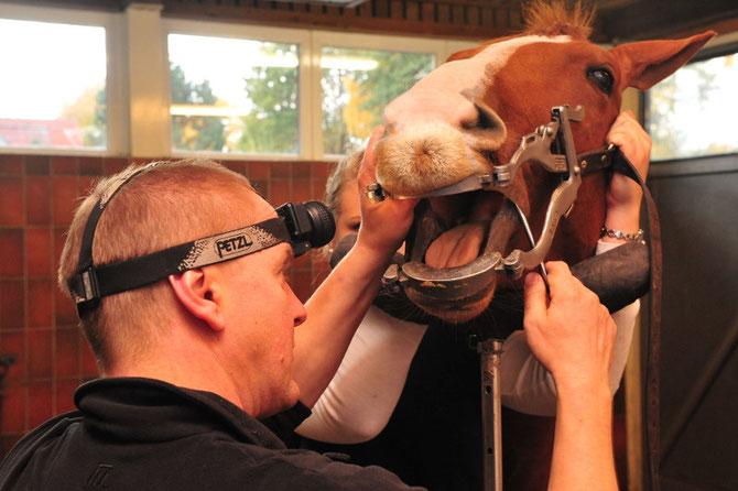 Tierärztliche Klinik in Großmoor