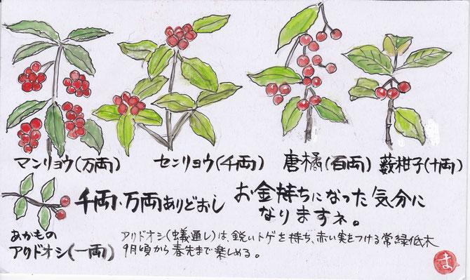 千両、万両など赤い実をつける常緑低木樹5点。