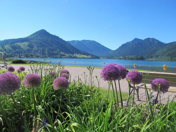 Unser Stolz - mit bunter Pflanzenvielfalt unser Kurpark am See!