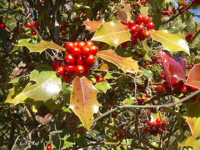 Auch der Herbst hat seine schönen Tage - Eberesche im Spätherbst