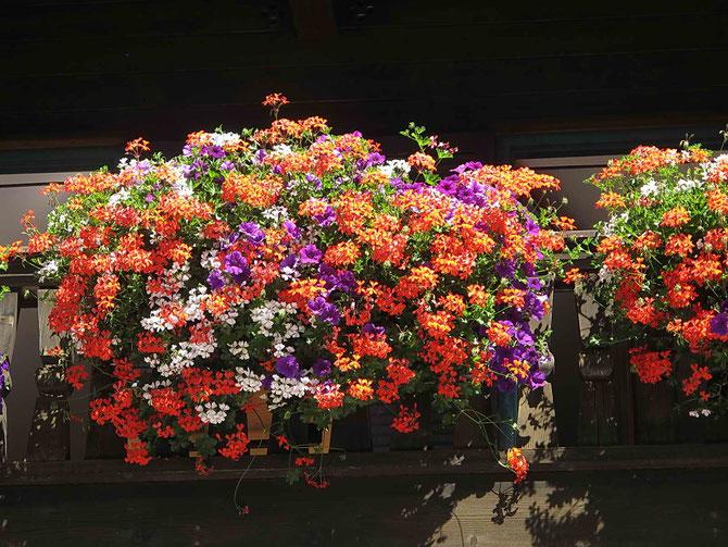 Vorbildlich - Blumenschmuck, eine Zierde fürs Haus und für den Ort!