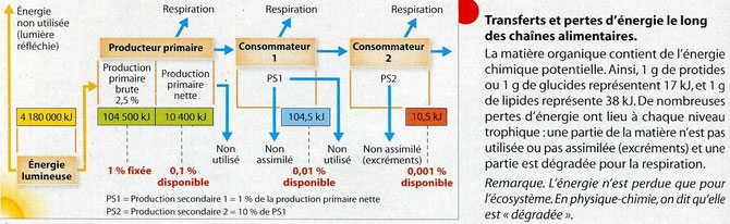 Trasnferts et pertes d'énergie le long d'une chaine alimentaire. Source: SVT; Nathan, seconde.