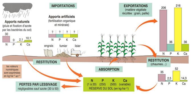 Schéma-bilan des intrants (apports naturels et artificiels), des restitutions et exportations dans un agrosystème. Source : http://defialimentairemonde.forum-canada.com