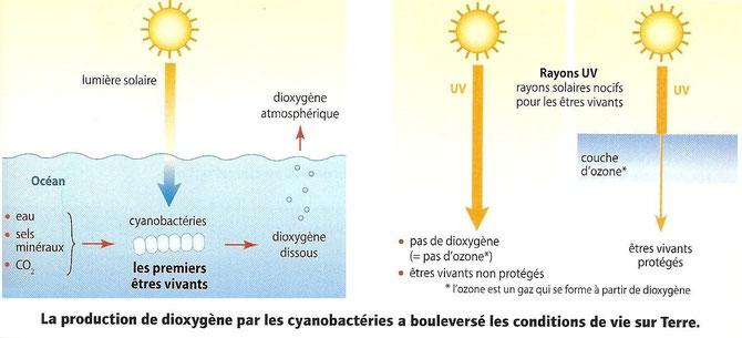 La production de dioxygène par les premières bactéries photosynthétiques: les cyanobactéries. Source: Jean Vilars SVT.