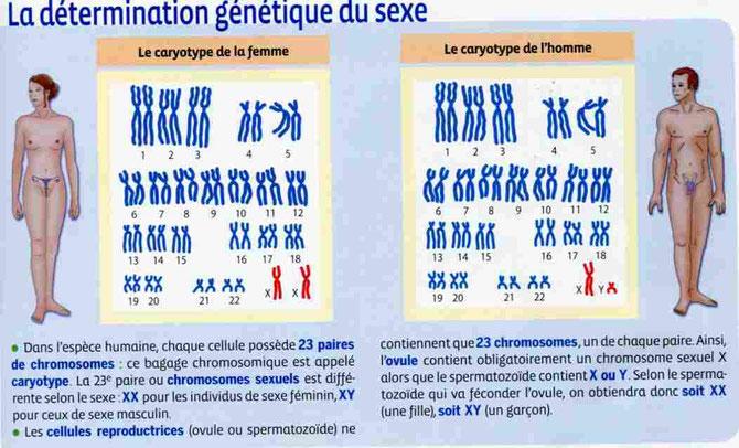 Le sexe génétique est déterminé par la présence de certains gènes sur les chromosomes sexuels (ici en rouge). Les chromosomes XX (= fille) ou XY (= garçon). Source :