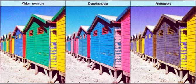 """Autre image montrant les principaux exemples de """"daltonismes"""". Source: internet, lycée Blaye."""