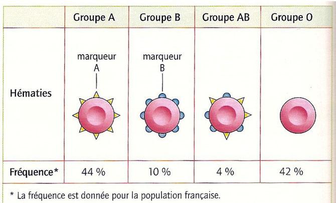 Marqueurs de surface des globules rouges A, B et AB. Et fréquence de ces groupes sanguins en France.