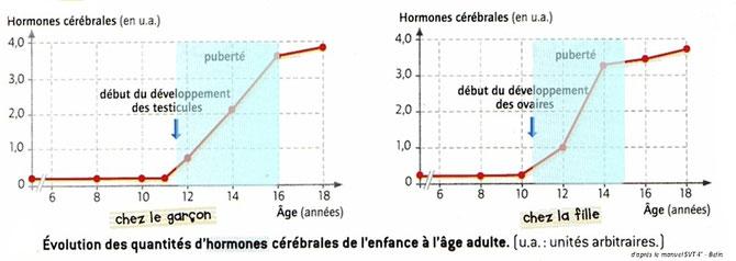 Concentration en hormones cérébrales étudiées chez le garçon et la fille au cours de leur enfance et adolescence. Source: Livre SVT Bordas, 2008.