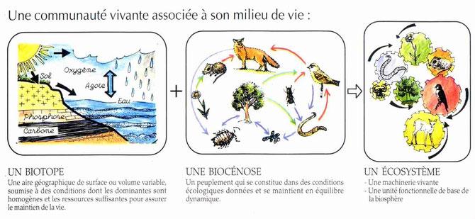 L'écosystème en schéma ! Source: https://lamaisondalzaz.wordpress.com