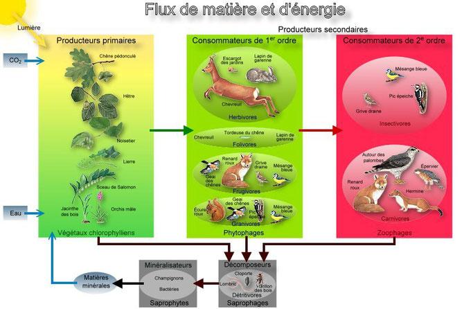 Schéma-bilan des flus de matière et d'énergie dans un écosystème. Source : https://lamaisondalzaz