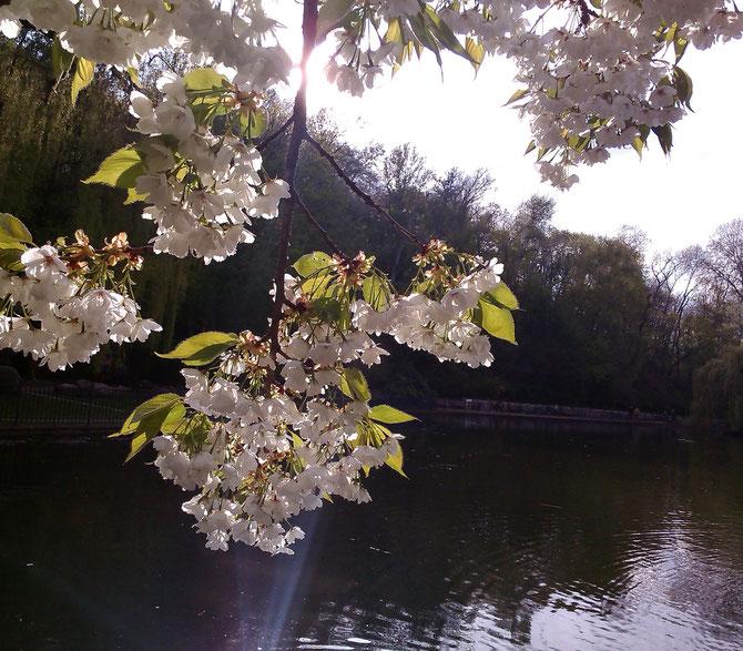 Blütenstrahl