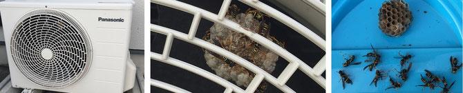 ハチ駆除 富山市