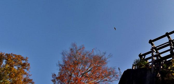 木曽川の北岸にそびえる天空の城苗木城紅葉真っ盛り木曽川の北岸にそびえる天空の城苗木城美菜ガルテンふるかわ美菜ガルテンふるかわ絶対満足!グルメお値打ち和食ランチ極上