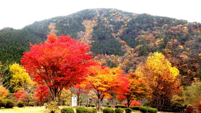 付知川紅葉美しい付知狭不動渓谷。中津川の里山の美しい紅葉真っ盛り付知峡周辺