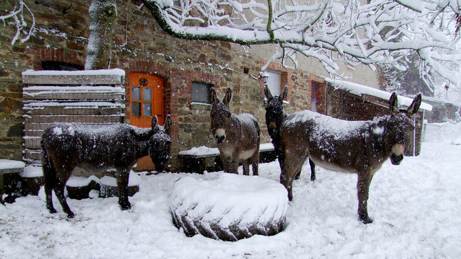 Winter 2016 - hinter dem Haus