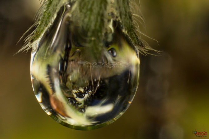 Ameisen im Wassertropfen