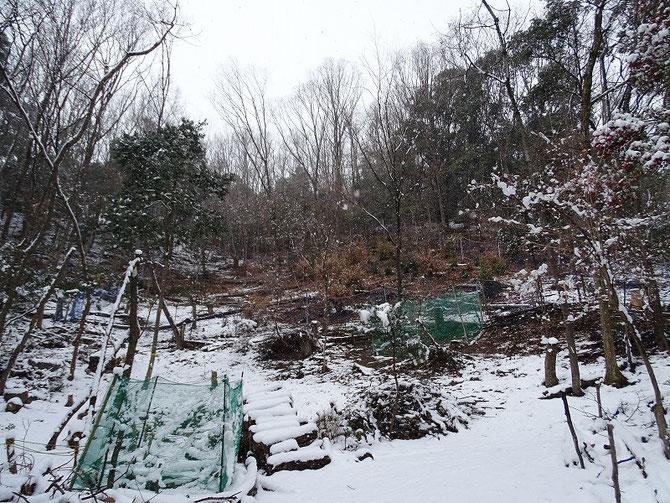 皆伐地は雪もなく落ち葉が見える。