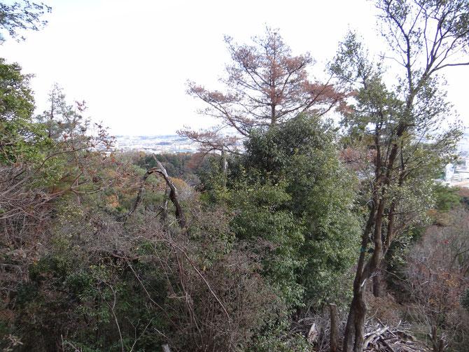 展望台からの景色をよくするため、枯れ松を伐倒しました。