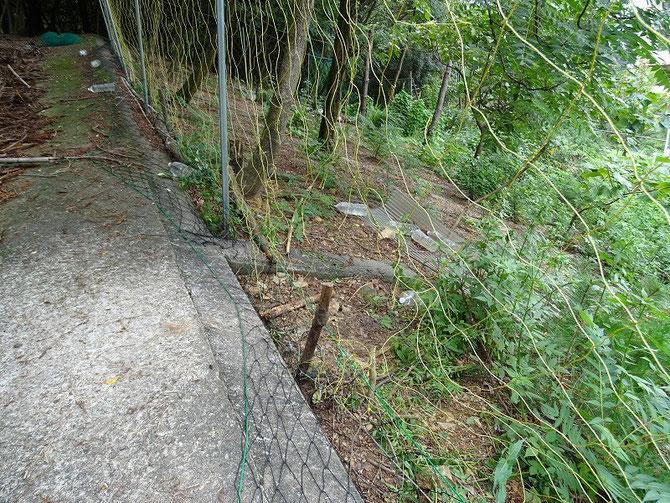 取り出すのにネットを切らないと出せなかったみたいで、人が通れるくらいの穴が開いていました。
