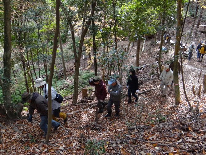 定例活動は、自己紹介、準備体操の後、林内を全員で巡回し、自然観察、道の点検、前月までの活動状況を見て回ります。落ち葉の道を登って行きます。