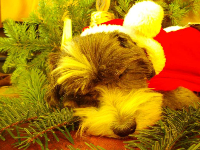 ...Kep verschläft das Weihnachtsshooting...