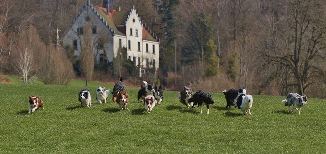 "8 Hunde von Katja ""of silent storm"" und 5 Hunde von Katja ""O Kuri"" :-))))"