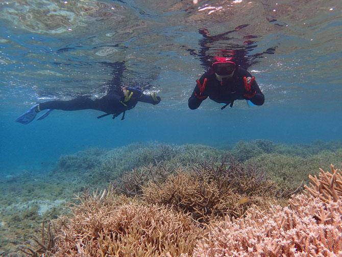 枝サンゴ シュノーケル 2